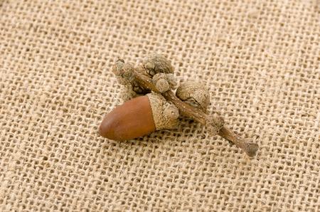 acorns on burlap background Stock Photo