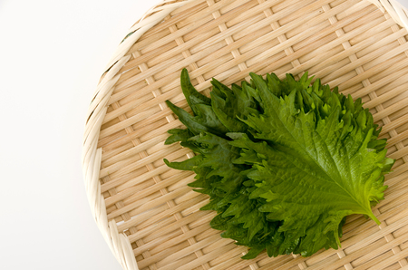 fresh green shiso (perilla) or oba leaf on a bamboo colander on white background