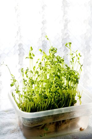 pea sprouts, green pea, green and yellow vegetable