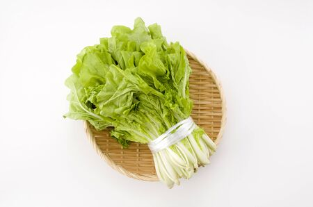 Shantung vegetables, a genus of Chinese cabbage called 'santou-na' on white