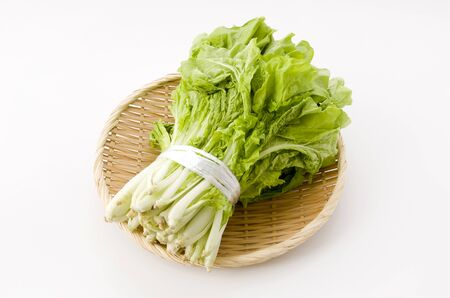 Shantung vegetables, a genus of Chinese cabbage called 'santou-na' on white Reklamní fotografie
