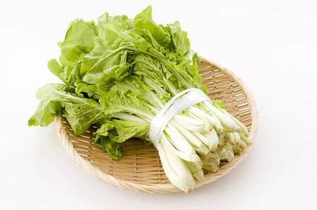 Shantung vegetables, a genus of Chinese cabbage called 'santou-na' in plastic bag on white