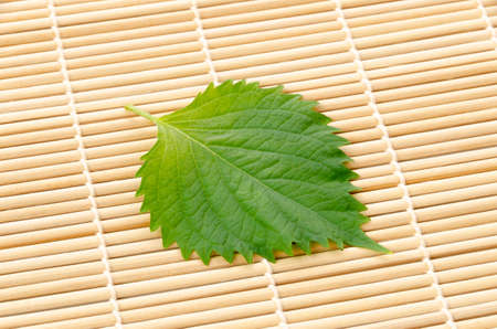 Fresh Green Shiso (perilla frutescens) or Oba leaf on bamboo rolling mat. Stock Photo