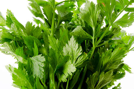 Close-up of Fresh celery leaf Banco de Imagens - 164710019