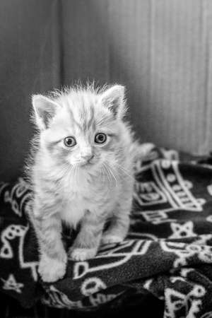 orphan: Curious Orphan Kitten after Rescue Stock Photo