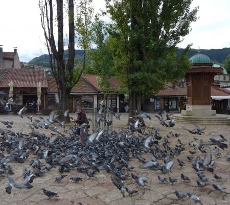 bosna: Bosna Sarajevo Bosnia BiH