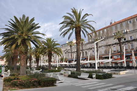 adria: Riva in Split in fron of Diocletian Palace with Palm Tree