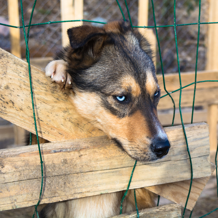 abandon: Head and paw of abandoned sad lonely dog siting in cage