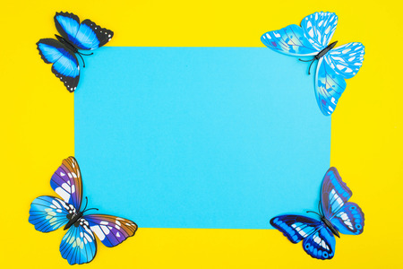 Blue butterfly on yellow background with blue paper with copy space in center, top view