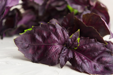 Closeup view of Italian food ingredient - red basil over grey background Stock Photo