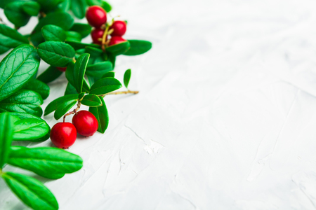 Green fresh leaves with berries on grey background with copy space