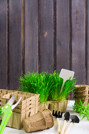 Spring garden. Green grass, organic pots, tools, pruner on wooden background with copy space, retro style. Vertical shot