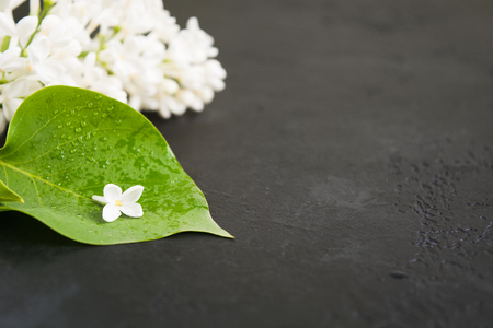 Spa cocnept with white lilac. One lilac flwer on green leaf over black background with copy space. Soft focus