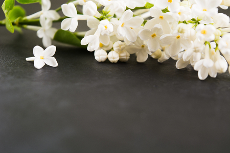 White lilac on black table. Flower abstract spring or summer background. Spa aromatherapy concept design for text. Copy space