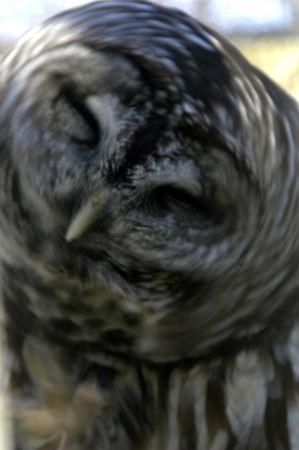 predetor: Owl in Motion
