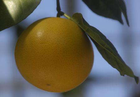 독방 오렌지 스톡 콘텐츠