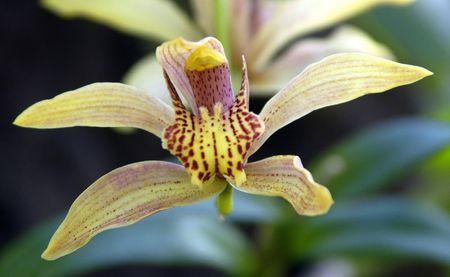 Unique Orchid Imagens