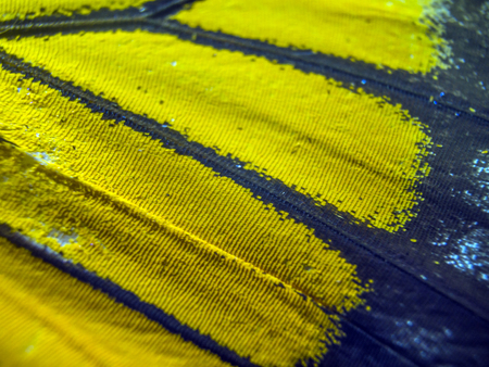 macro photo of a butterfly wing Stock Photo