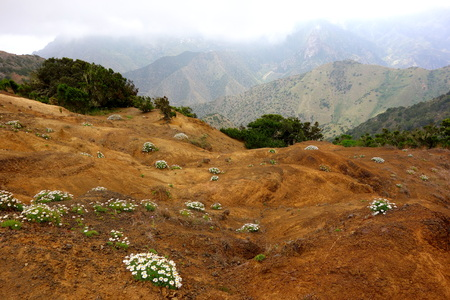 vallehermoso: Flowers near Vallehermoso in La Gomera island