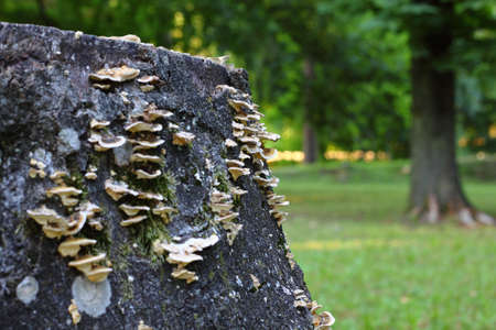 Old fungus-infested tree stump in the forest Stock Photo