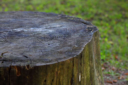 Tree rings on an old tree trunk