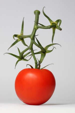Single red tomato with green happy twig Stock Photo