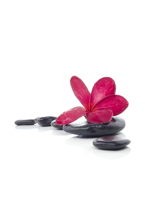 Beautiful red frangipani flower with spa stone isolated white background