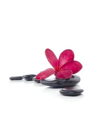 Mooie rode Frangipani bloem met spa steen geïsoleerde witte achtergrond Stockfoto