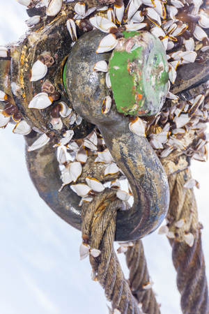 Industrial equipment. Closed up of heavy weight shackle coated with moss and coral reefs attached to pad eye buoyancy tank for anchor handling activities. Stock Photo