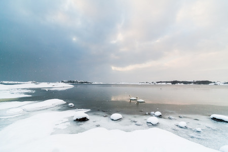 scandinavian landscape: A scenic Scandinavian Swedish landscape as two swans are swimming in the cold ocean right outside a rocky beach thats covered in snow. It is still snowing a bit. Location: Amundo Island south of Gothenburg in Sweden.