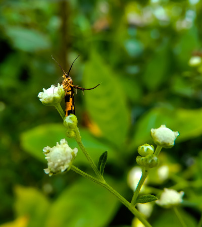 samll: samll insect standing on flower Stock Photo