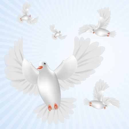 White pigeons isolated Illustration