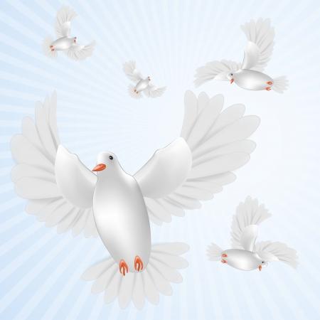 White pigeons isolated Illustration