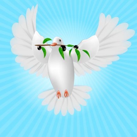 White pigeon with olive branch isolated