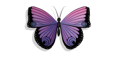 butterfly isolated: Butterfly isolated
