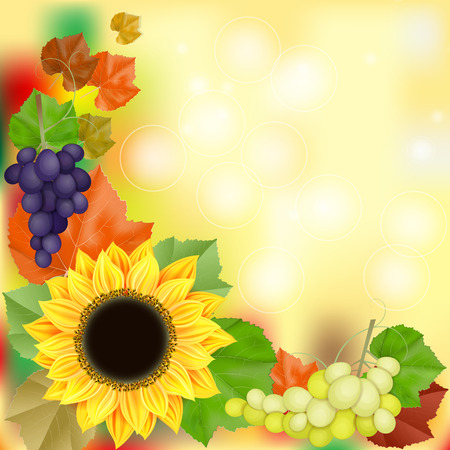 Autumn card with grapes and sunflower