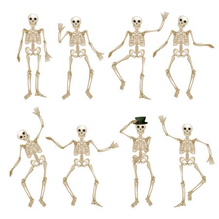 Menschliches Skelett-Set Standard-Bild - 46597905