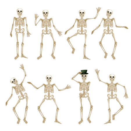 Human skeleton set
