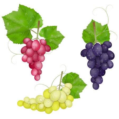 red grape: different varieties of grapes with leaves on white background