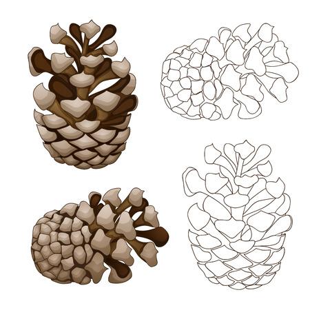 Pine cone illustration Stock Photo