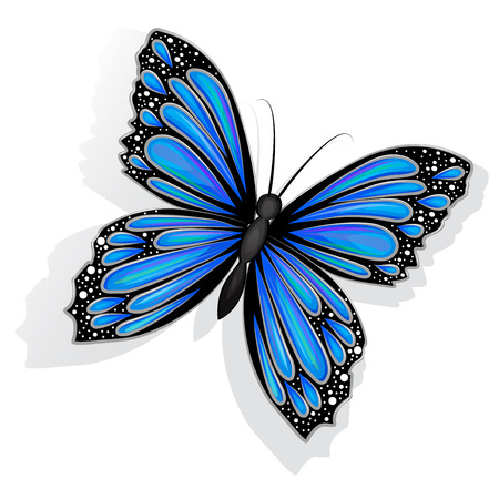 feeler: Beautiful blue butterfly isolated