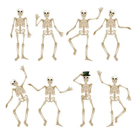 Menschliches Skelett-Set Standard-Bild - 51656221