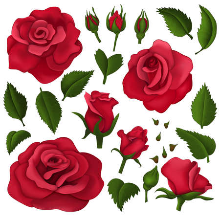 Red roses elements over white background