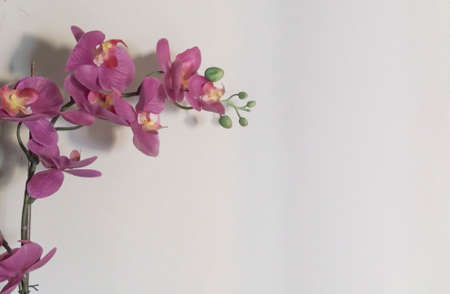 background of pink orchid flowers on white background