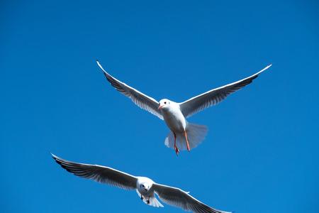 the seagulls: The Seagulls Stock Photo