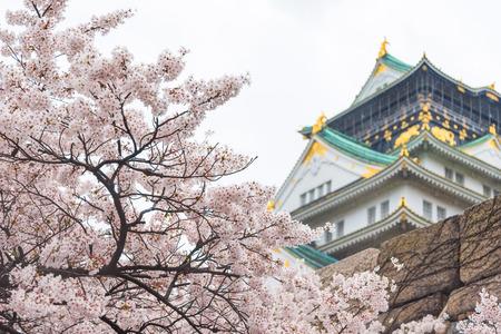 cerezos en flor: flor de cerezo, Japón Osaka castillo