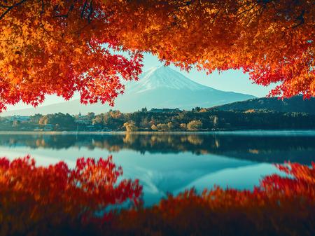 kawaguchi: Mt.Fuji in autumn,morning