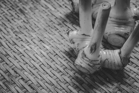 threshing: rhizome of galangal on weave threshing basket , black and white Stock Photo