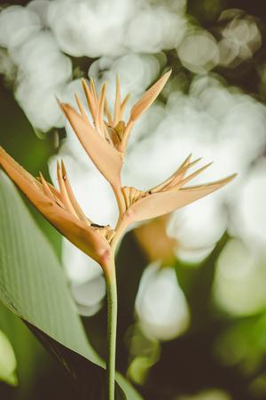 ave del paraiso: centrado una flor de naranja paraíso de las aves con las hojas verdes, la vendimia