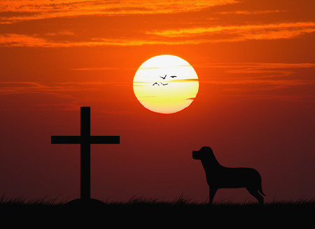 red cross red bird: Silhouette of the cross with the sunset